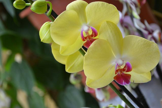 Flower, Yellow Orchid, Decorative, Offer, Events
