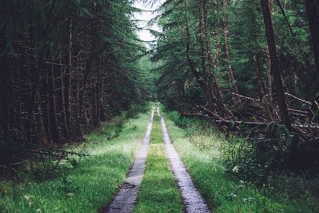 Conifer, Daylight, Evergreen, Flora, Foliage, Forest