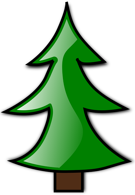 Conifer, Evergreen, Fir Tree, Christmas Tree, Tree