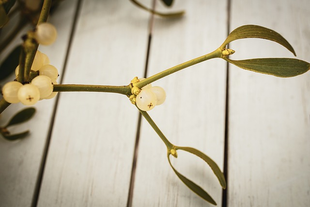 Mistletoe, Christmas, Advent, Plant, Evergreen