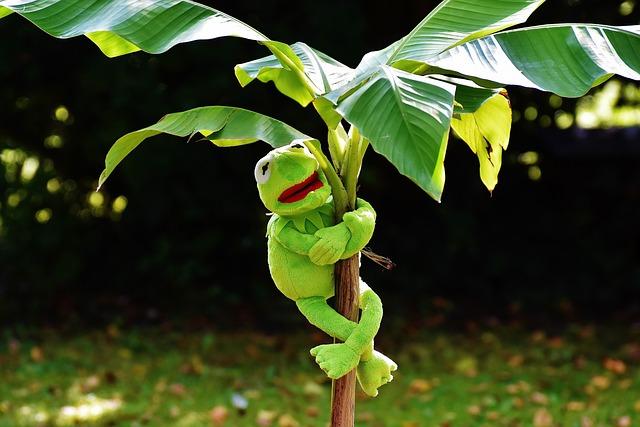 Exasperate, Kermit, Frog, Kermit Frog, Green, Toys