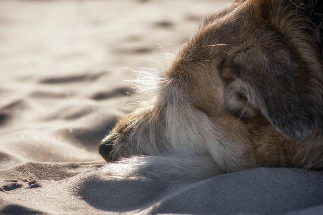 Dog, Baltic Sea, Mixed Breed Dog, Pet, Exhausted, Sand