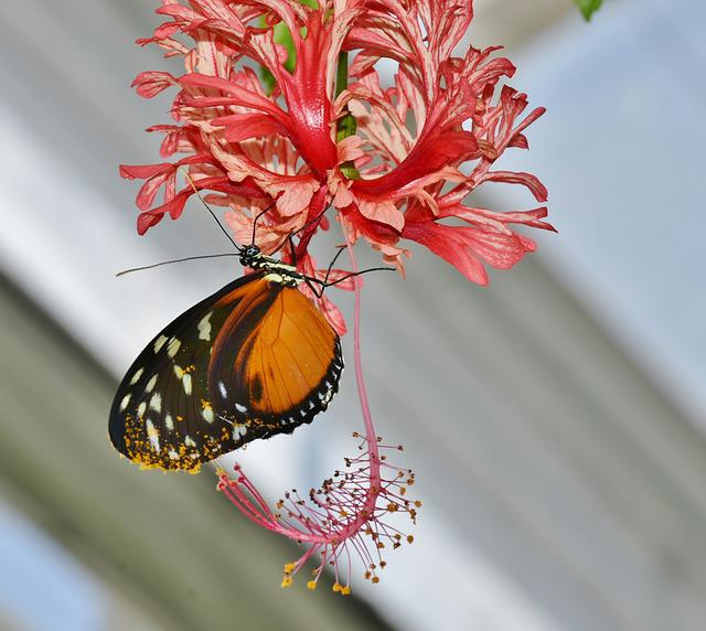 Butterfly, Colorful, Insect, Exot, Exotic, Nature