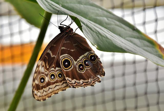 Butterfly, Tropical Butterfly, Exotic, Insect, Wing