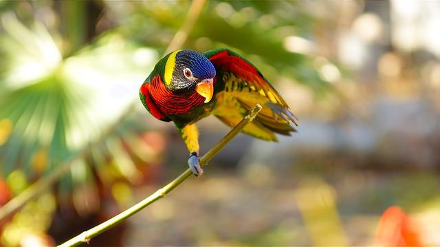 Parrot, Bird, Feather, Colored, Exotic