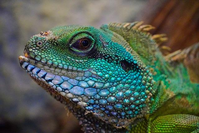 Lizard, Colorful, Head, View, Exotic, Reptile, Scale