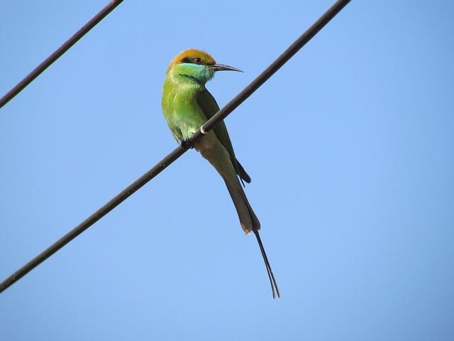 Kingfisher, Bird, Alcedo Atthis, Small, Green, Exotic