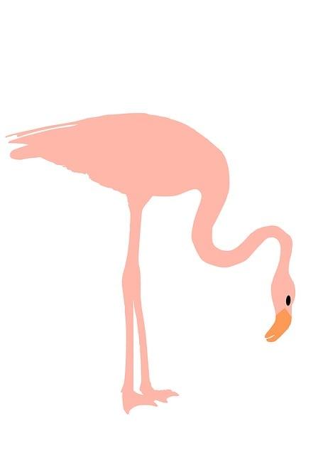 Flamingo, Pink, Bird, Exotic, Tropical, Nature, Animal
