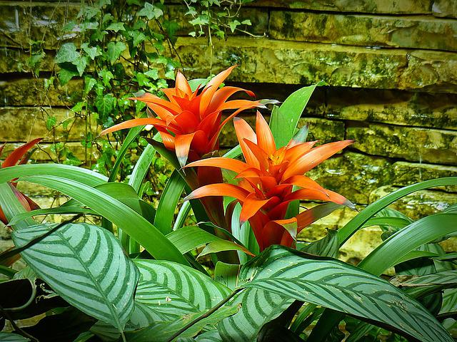 Bromeliad, Plant, Structure, Nature, Exotic, Blossom