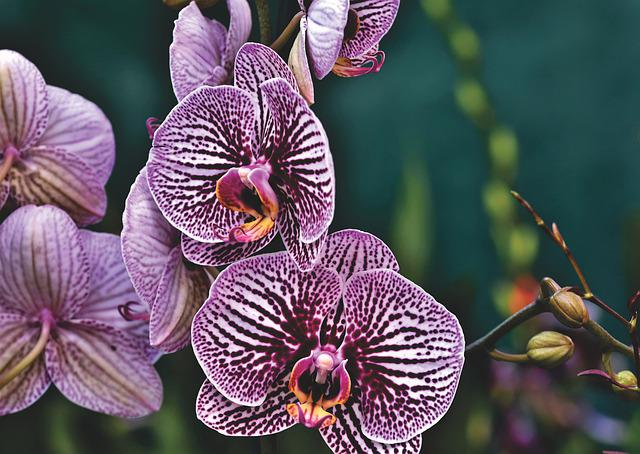 Orchid, Blossom, Bloom, Tropical, Exotic, Petals
