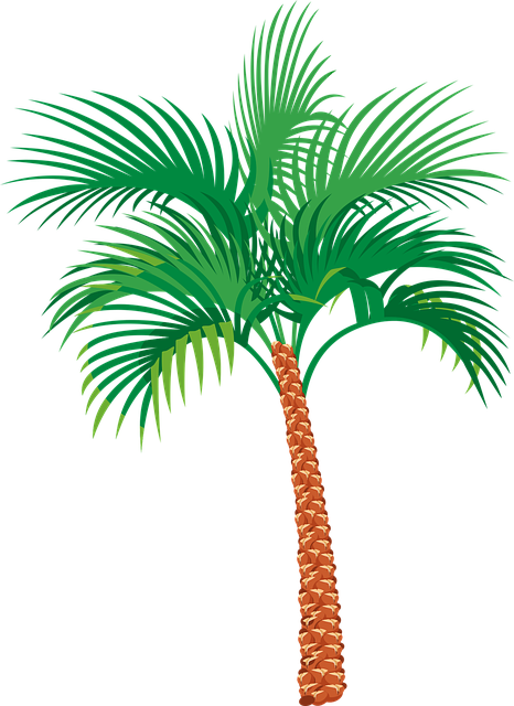 Palm Tree, Exotic, Vacation, Tropical, Plant, Summer