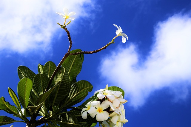 Exotica, Maldives, Blue, Sky, Flowers, Paradise, Nature