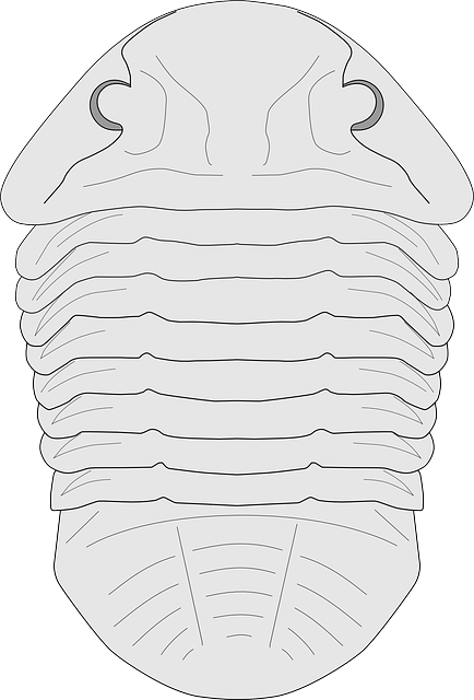 Fossil, Trilobite, Creature, Imprint, Extinct