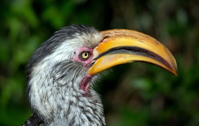 Hornbill, Bird, Bill, Plumage, Eye