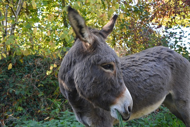 Donkey, Equine, Domestic Animal, Wore Profile, Eye