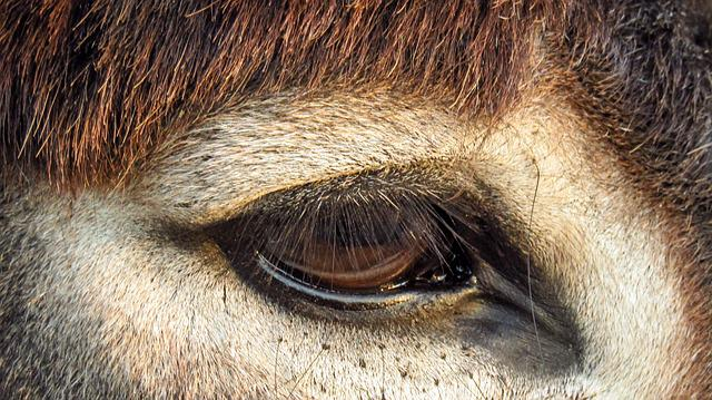 Look, Eye, Donkey, Tabs, Animals, Head