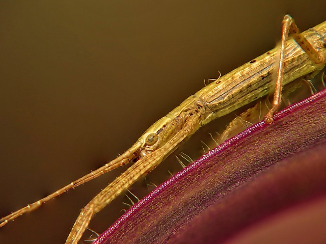 Stick Insect, Macro, Eye, Insect, Antennae