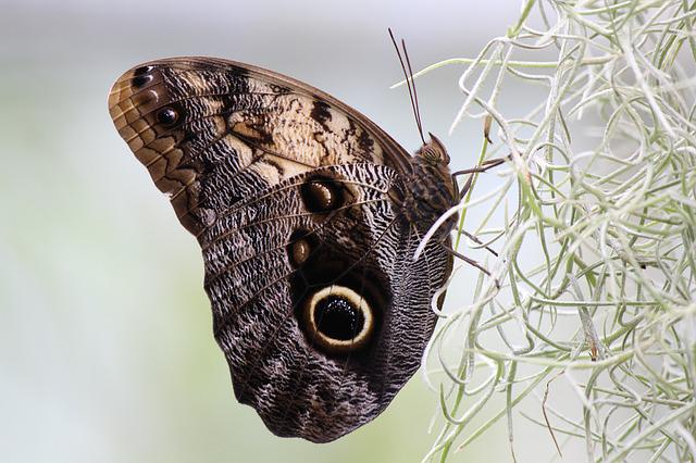 Butterfly, Nature, Eye, Plant, Owl Butterfly