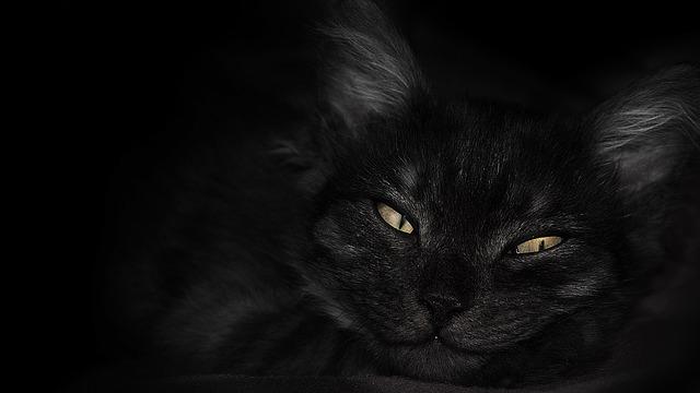 Kitty, Wallpaper, Animal, Pet, Black, Eyes