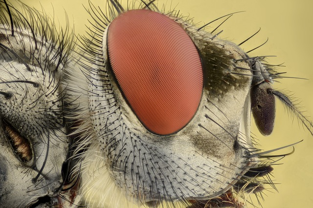 Insect, Extreme, Macro, Eyes, Bug, Fly, Focus, Animal