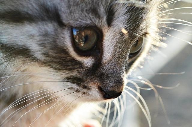 Cat, Kitten, Animals, Person, Eyes, Pets, Nose