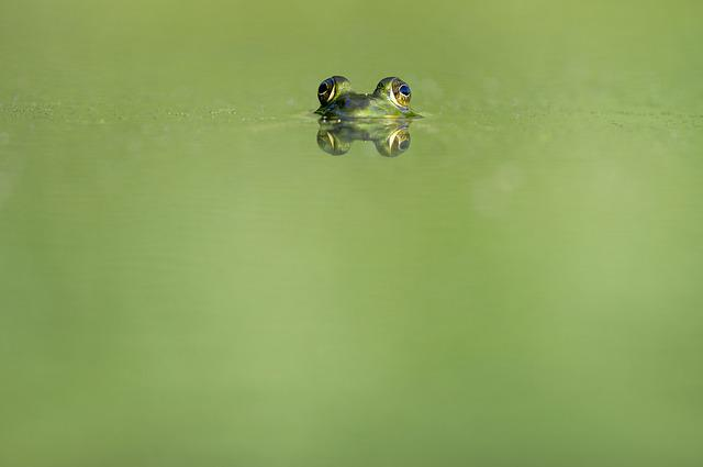Animal, Beady Eyed, Blur, Ecology, Eyes, Frog, Green