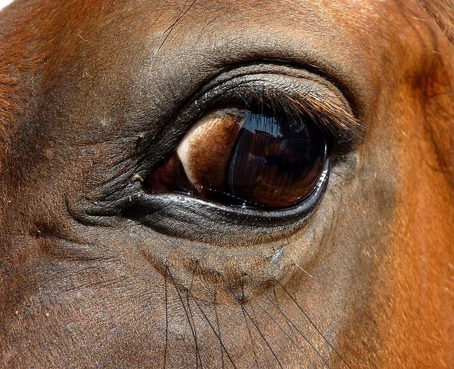 Eye, Horse, Close Up, œil, Eyelashes, Look, Eyes