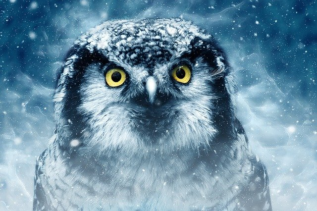 Bird, Owl, Eyes, Animal, Looking, Nature, Wildlife