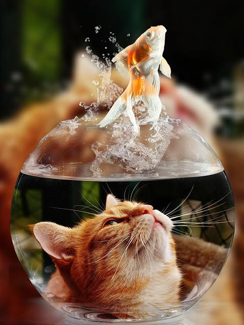 Cat, Face, Goldfish, Glass, Close Up, View, Eyes