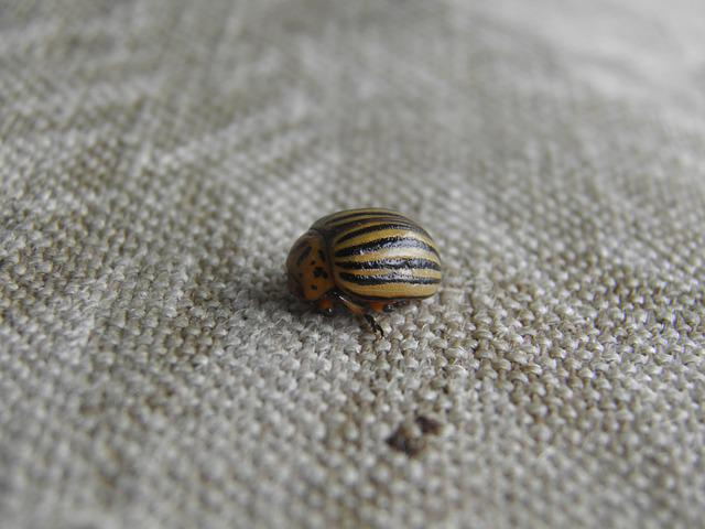 Kolorádóbogár, Potato Beetle, Fabric
