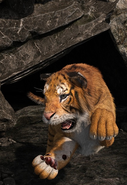 Tiger, Face, Animal World, Cat, Wild, Dangerous, Cave