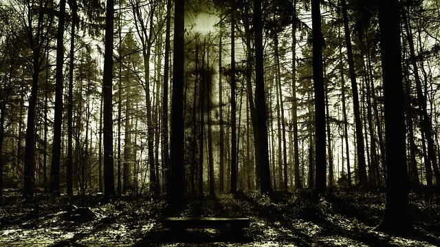 Horror, Face, Forest, Spirit, Zombi, Fash, Horror Film