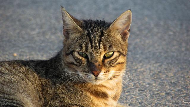 Cat, Stray, Eyes, Face, Look, Wild, Looking, Street