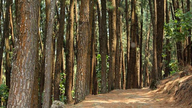 Wood, Tree, Nature, Landscape, Fair Weather, Pine