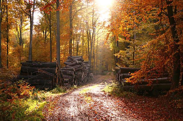 Forest, Fairy Forest, Autumn, Leaves, Yellow Leaves