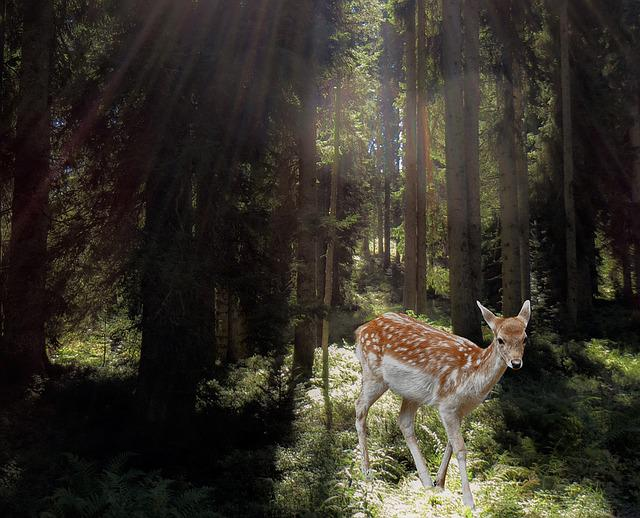 Roe Deer, Forest, Mysticism, Fairy Tales, Mystical