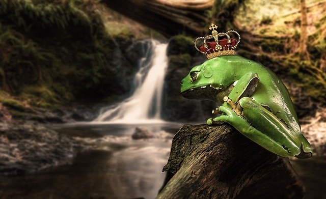 Nature, Waters, Wood, Fairy Tales, Frog Prince, Prince