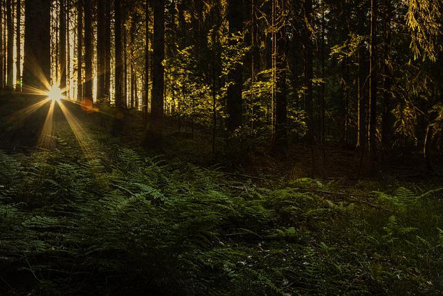 Sunset, Black Forest, Mystic, Light, Fairytale