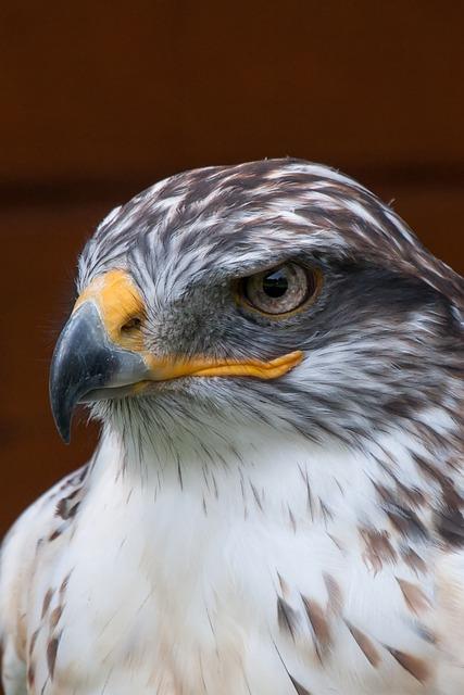 Bird Of Prey, Animal World, Falcon