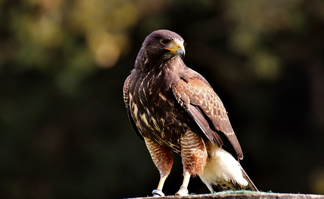 Falcon, Wing, Bird Of Prey, Animal, Falconry, Bill