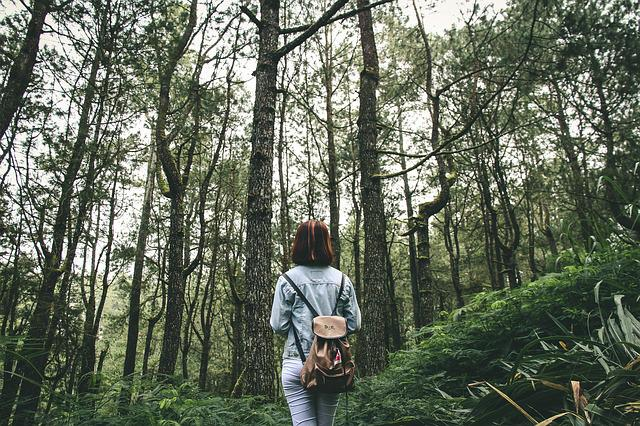 Adult, Adventure, Backpack, Environment, Fall, Forest