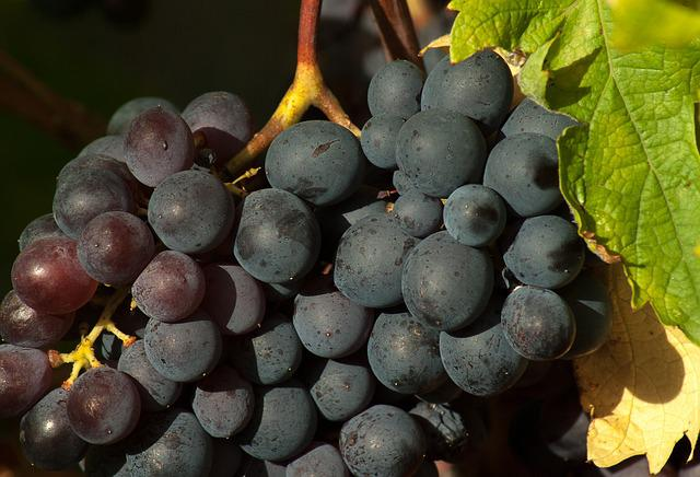Vine, Grape, Fall, Bunch Of Grapes, Harvest