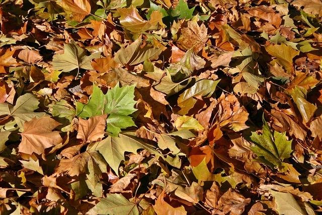 Fall Foliage, Autumn, Leaves, October, Fall Color