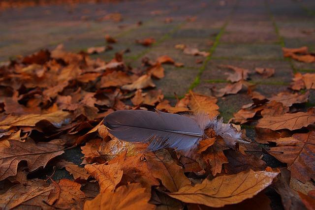 Autumn Leaf, Fall Colors, Autumn, Garden, Feather