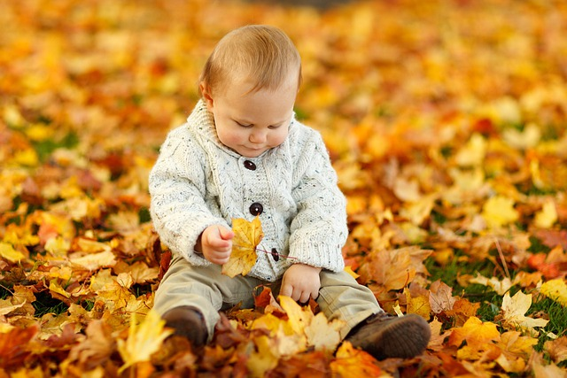 Autumn, Fall, Baby Boy, Child, Cute, Kid, Outdoor, Park