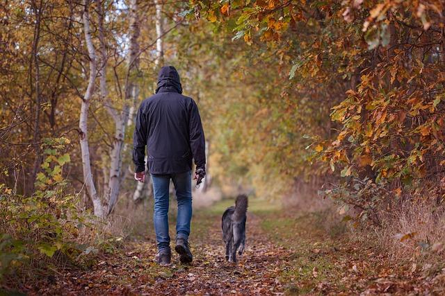 Autumn Walk, Autumn, Fall Foliage, Fall Color