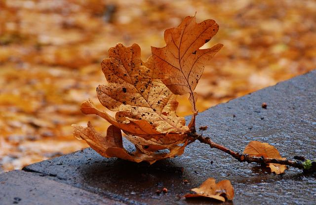 Autumn Leaf, Oak Leaf, Leaf Fall, Fall Foliage