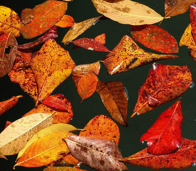 Autumn, Leaves, Fall Foliage, Fall Color, Water, Pond