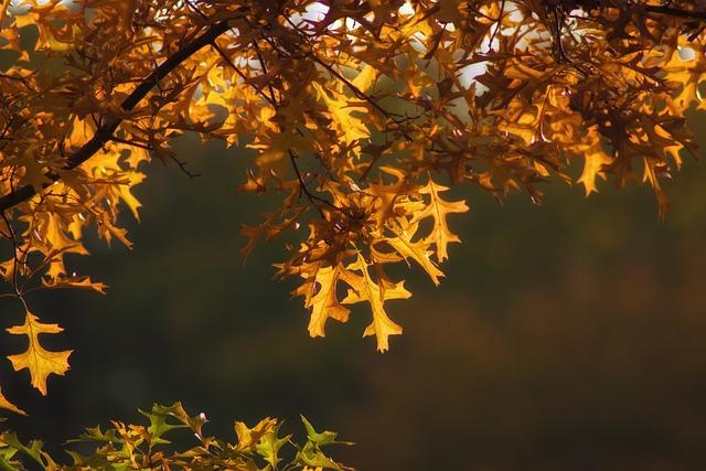 Autumn, Fall Foliage, Leaves, Golden Autumn, Yellow