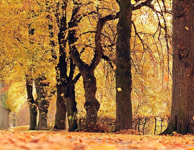 Trees, Avenue, Autumn, Away, Mood, Outdoor, Fall Leaves